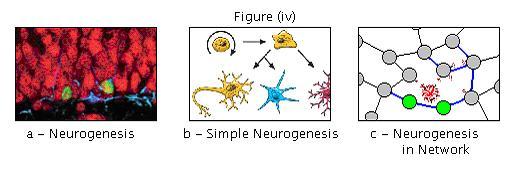 Brain repair figure iv