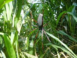 Spider01250