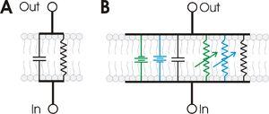 RC membrane circuit