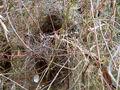 Bird nest in grass.jpg