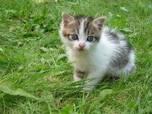 Stray kitten Rambo002