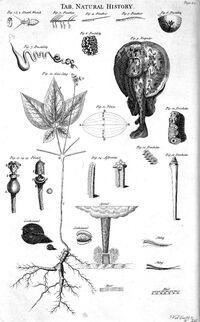 Table of Natural History, Cyclopaedia, Volume 2