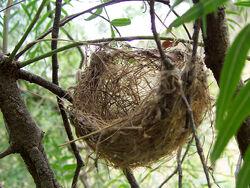 Basket style nest