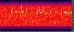 Humpback song spectrogram