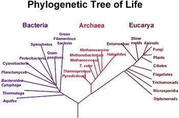 PhylogeneticTree