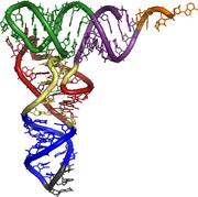 3d tRNA