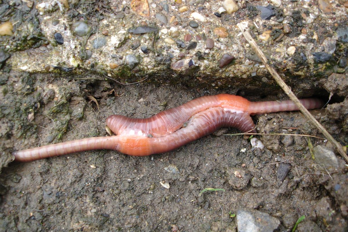 Earthworms | Psychology Wiki | FANDOM powered by Wikia