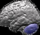 Spinocerebellar ataxias