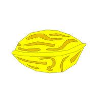 Nutwal Fruit