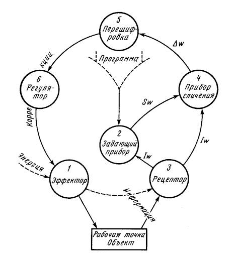 Схема кольца Бернштейна