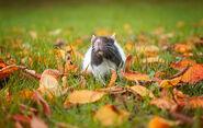 Cutest-Rats-34
