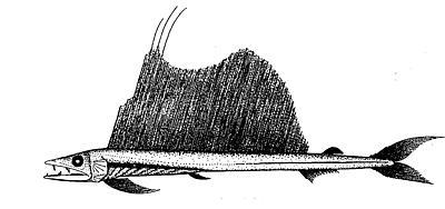 File:Longnoselancetfish.jpg