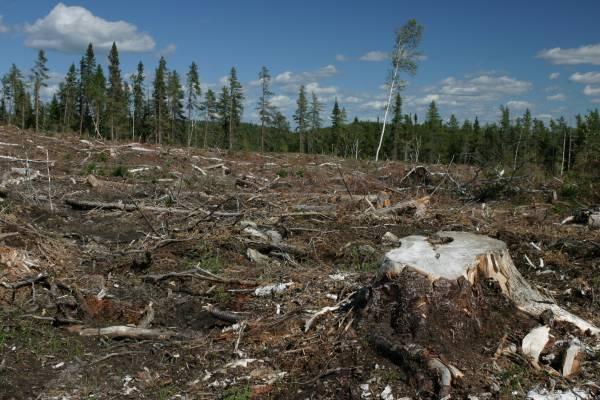 File:Deforestation-sep09.jpg