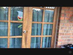 Thomas window reflect