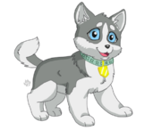 Puppy in my pocket husky by gold fang-d4g0w13
