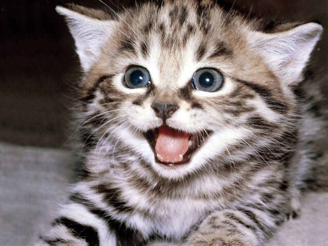File:Happy-kitten-kittens-5890512-1600-1200.jpg