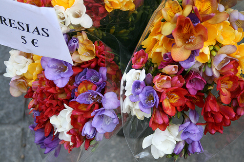 Fresias in the Market