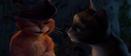 Kittypus