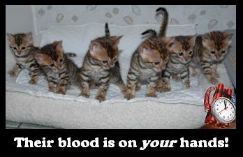 Panic kittens