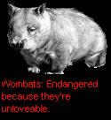 Edru's UnloveableWombat