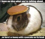 Rabbit With Pancake On The Head