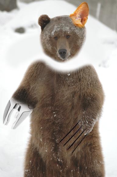 Panic Auron Bear