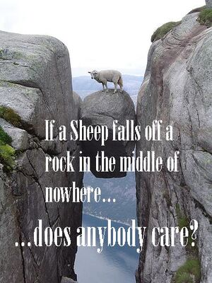Sheep Fail