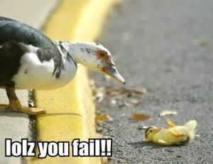 Duck Failure