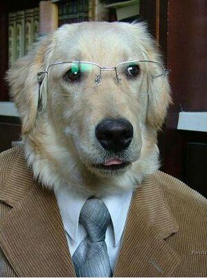 Professordog