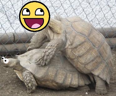 Bad turtles