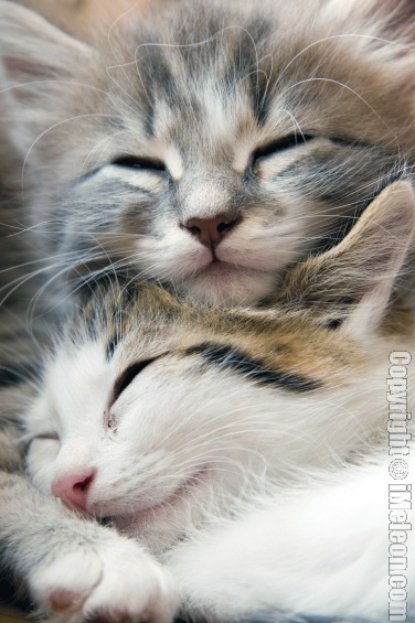 Sleeping kittens