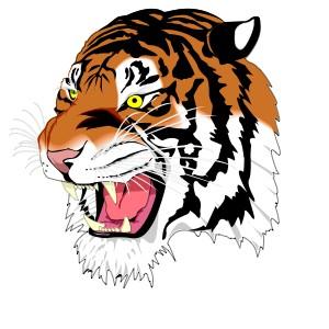 Tiger Grrr