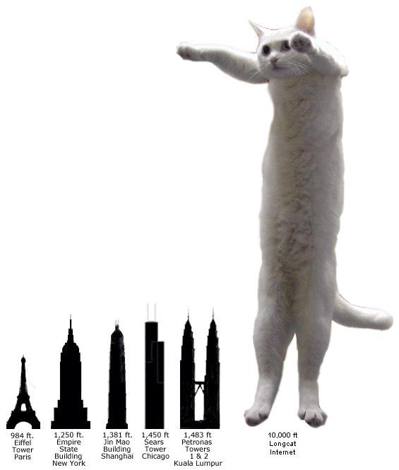 Longcat Comparison
