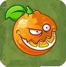 Orange Chewerst