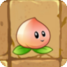 Heavenly Peach2