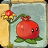 Pomegranate-pultst