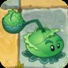 Cabbage-pultO