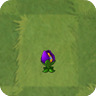 Shrinking Violet2C
