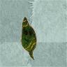 Tea Leaf2