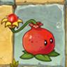 Pomegranate-pultO
