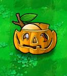 Chesa Slinger Pumpkin