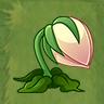 Orchid Cactus2