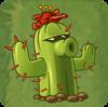 CactusNEW-0