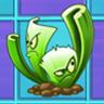 Celery Stalker2