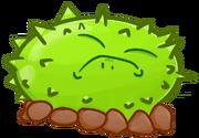 Pestle Cactus1
