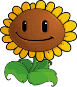 Plant Sunflower