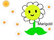 Another Marigold drawing