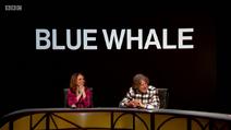 QI Blue Whale
