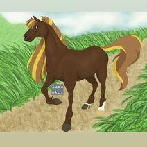 Jameson the Horse