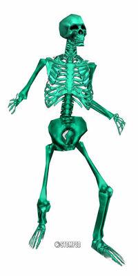 P bones